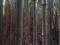 japonsko_kamakura 5
