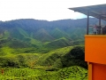 malajsie_cameron_highland_1