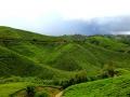 malajsie_cameron_highland_2