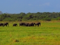 dambulla_minneriya_sloni_safari_3