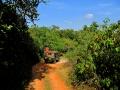 dambulla_minneriya_sloni_safari_4