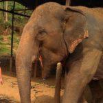 Thajsko, Chiang Mai – Sloní záchranná stanice, kde se se slony skamarádíte