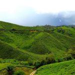 Malajsie, Cameron Highland – Čajové plantáže, vodopády, farmy a parádní výhledy